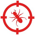 Hormigas en Badalona