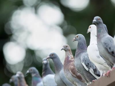 Control de plagas de aves en barcelona