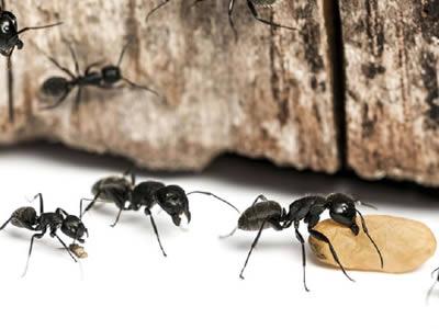 control de plagas de hormigas en barcelona