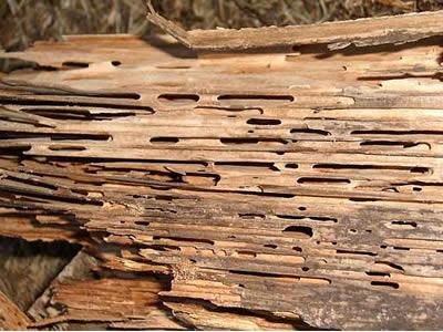 termitas en Barcelona