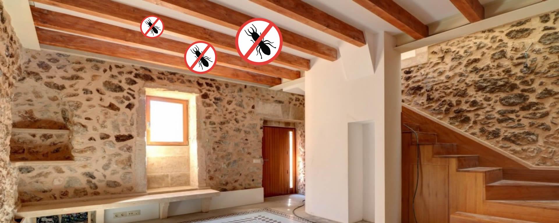 tratamientos-contra-las-termitas en barcelona